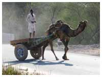 Rajasthan Camel Safari Tour Packages , Rajasthan Camel Safari Tour Operators