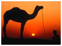 Rajasthan Special Tour Package,Special Rajasthan Tour Package